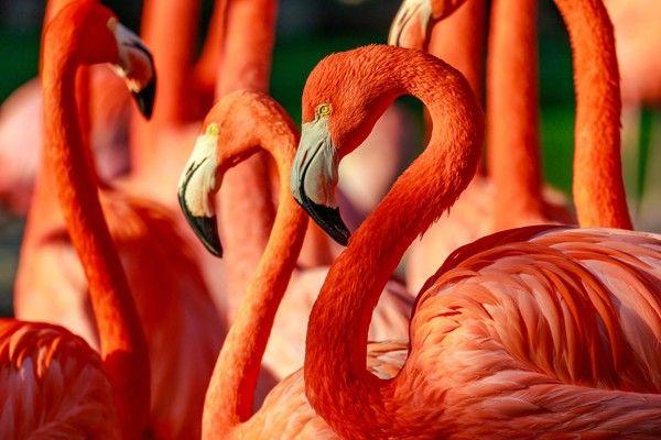 "Bild Acrylglas \""Flamingos"