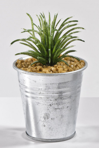 Kaktus im Topf