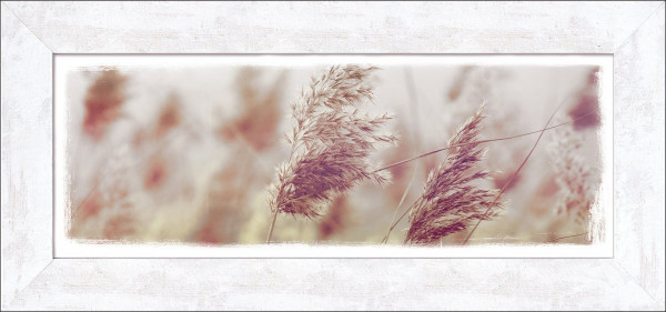 Gerahmtes-Bild FLOWERS