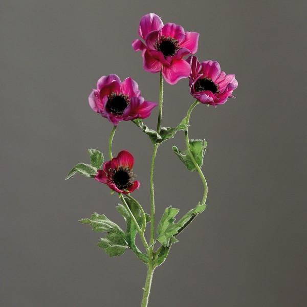 Anemone lila
