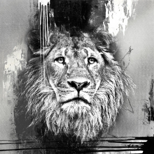 Originalbild LION