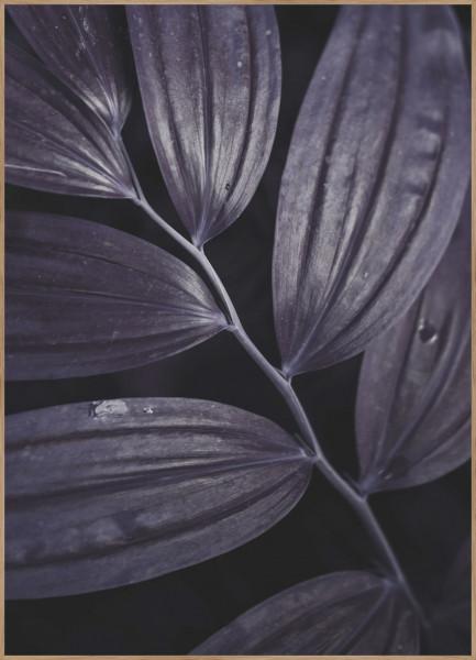 Bild Dark plant (BH 70x100 cm)