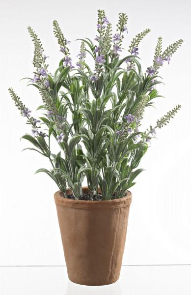Dekopflanze Lavendel