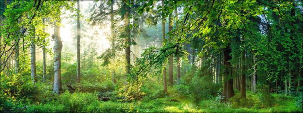 Forest Harmony I