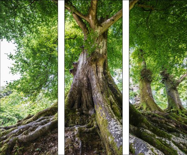 Bild Tree Of Life (LB 90x80 cm)