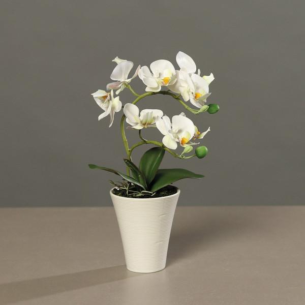 Orchidee creme