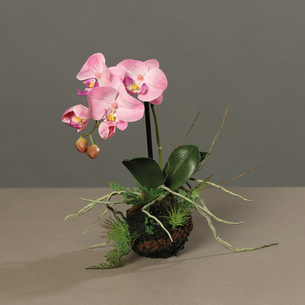 Orchidee pink/creme
