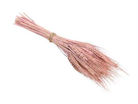 Bündel Weizengras pink