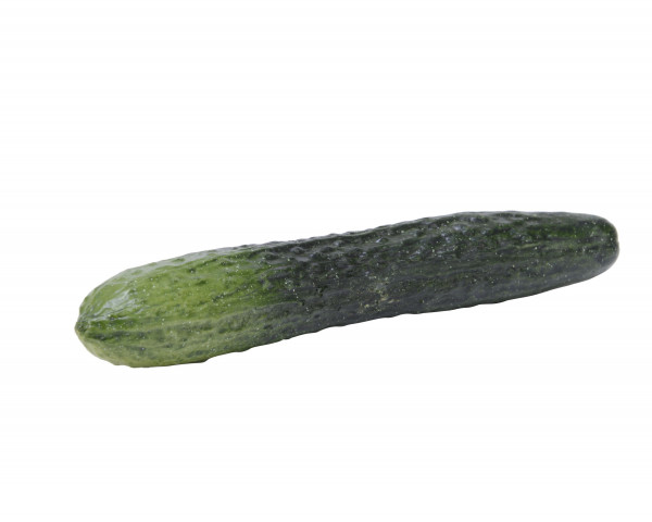 Kunstpflanze Gurke