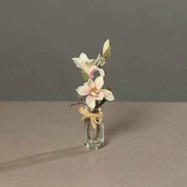 Magnolie im Glas creme