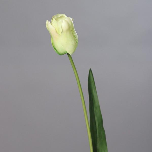 Tulpe Gigant grün (H 84 cm)